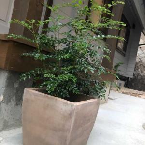 我が家の植栽紹介♡BESSの家に住む