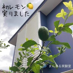 望みという種をまこう...レモン実る♡