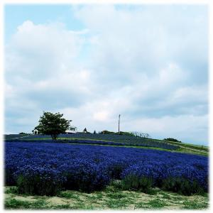 わかっていても、北海道へ行きたい気持ちが辛過ぎ問題(;O;)