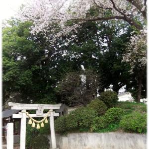 朔日参りと桜