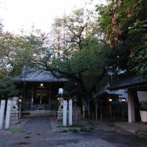 御園神社のねこ