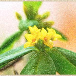 オニシバリの花