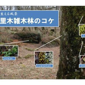 苔の生える風景:十里木の雑木林