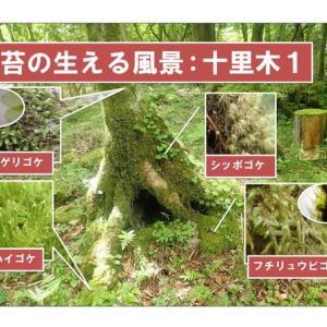 苔の生える風景:十里木1