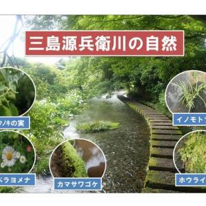 三島源兵衛川の自然