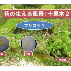 苔の生える風景:十里木2