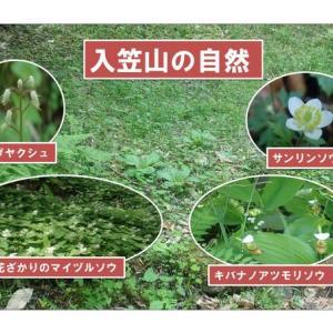 入笠山の自然