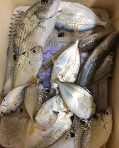 【新舞子海岸】ゼンメ大漁!【釣果情報】