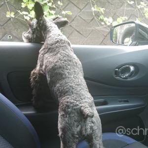 えまさんドライブパトロール