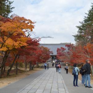 寺院右0681  仁和寺の紅葉