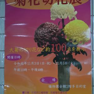 ポスター0141 菊花切花展