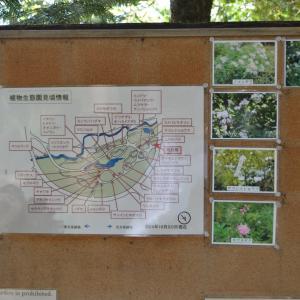 まち歩き左1419 植物園生態園 見頃情報 R1.10.20現在