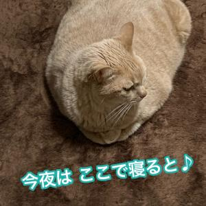 おやすみなさ〜い