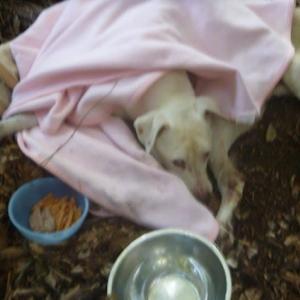 一人ぼっちで15年 野良犬「シロ」の物語 12