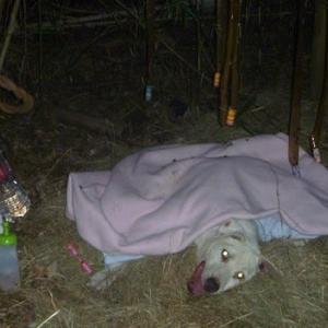 一人ぼっちで15年 野良犬「シロ」の物語 13