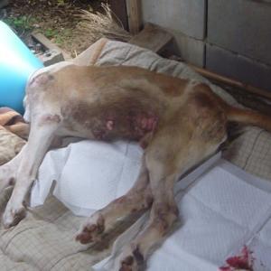 一人ぼっちで15年 野良犬「シロ」の物語 14