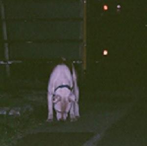 一人ぼっちで15年 野良犬「シロ」の物語 19