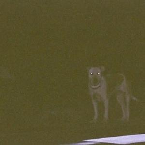 一人ぼっちで15年 野良犬「シロ」の物語 20