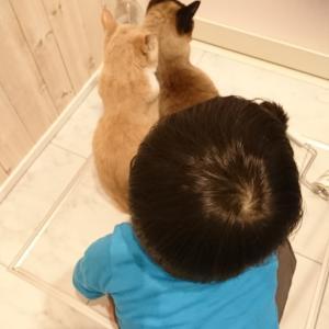 行列のできるお風呂場