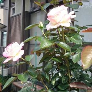 植物大好き、いろはの花図鑑!