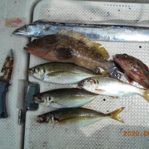 2020年08月08日船釣り日記