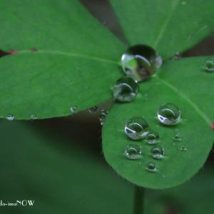 雨上がりの水玉