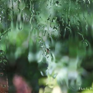 雨降りは窓辺で...