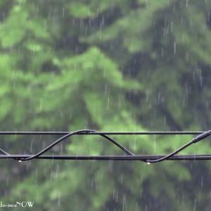 やっと梅雨の感じ...