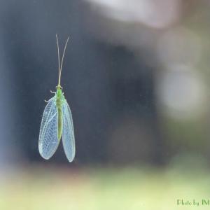 身近な...昆虫たち