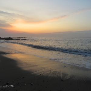 潮が引いた磯の朝