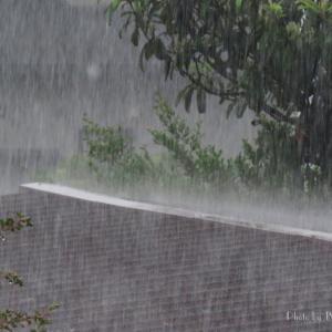 雨上がりには...