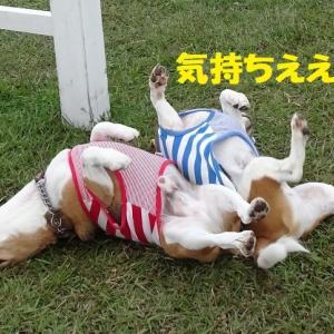 感動を与えてくれた日本ラガーマン!