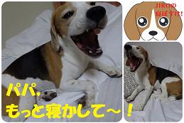 TARO&JIROを抱いて寝ると,めちゃ温かいんです!
