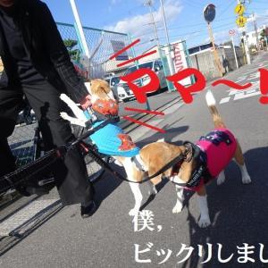 TARO&JIRO,昼散歩で嬉しいハプニング!
