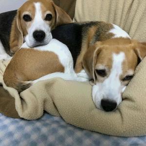 TARO&JIROの寝姿。どこかが違う?違いがわかりますか?