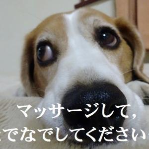 許せない!犬のウ○チの放置はなぜ?