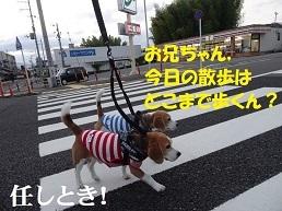 """""""ビーグルブログ村""""の危機?!"""