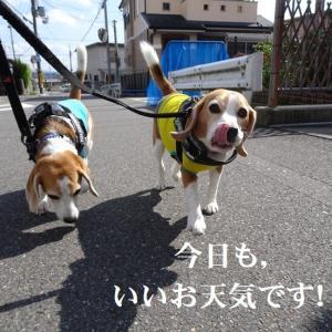 TARO&JIROのにらめっこ!