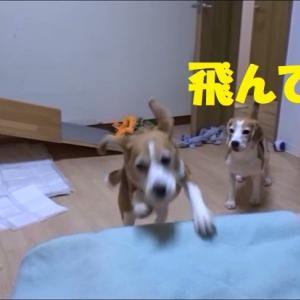 おうちではJIROよりやんちゃ坊主のTARO!