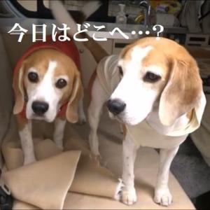 車でのお出掛けが大好きなTARO&JIRO!