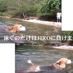 お馬さんが怖いTARO&JIRO…