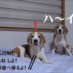 TAROJIRO,ねんねの時間やで!