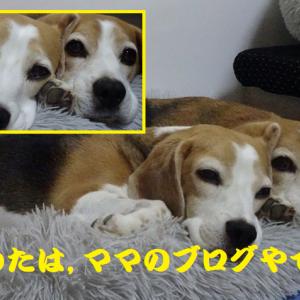 親友の愛犬達の歯の白さに驚いたTAROパパ!