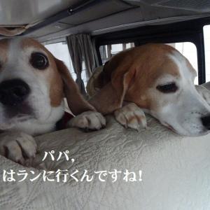 お散歩もランも大好きなTARO&JIRO!