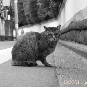 Get Some Rest, ZUYA!(ちょっと休みなよ!)