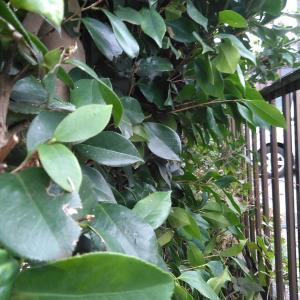 今日も忙しく…裏庭の剪定