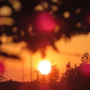夕陽と変わらない花達