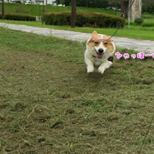公園散歩♪