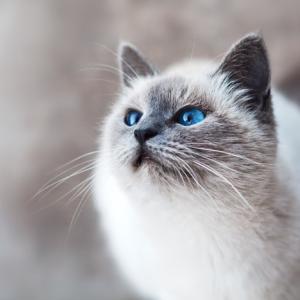 私は猫を飼うべきですか? 暮らしをシンプルにしているところなのですが←質問の回答。