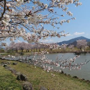 長野:桜巡り「川中島古戦場史跡公園」!